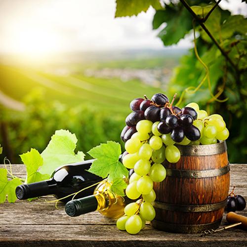 Wein & Prosecco